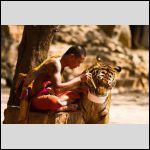monah_i_tigr.jpg