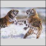 С Годом Тигра! :-)